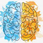 Jelita mózg