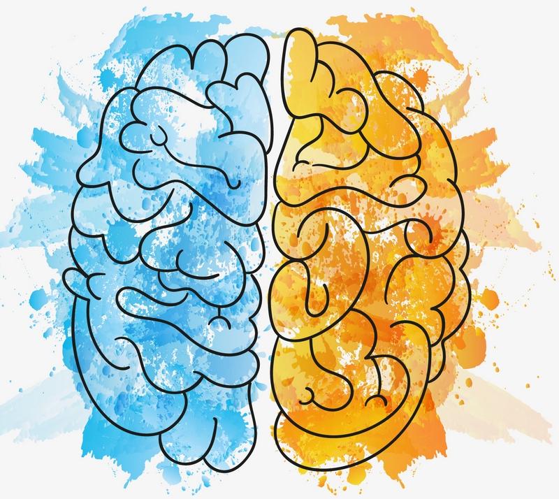 Dlaczego mówi się, że jelita to nasz drugi mózg?