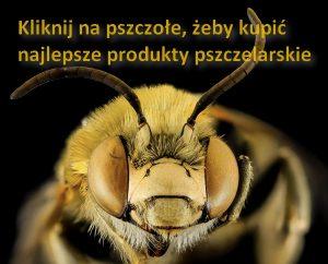 Pierzga i produkty pszczelarskie