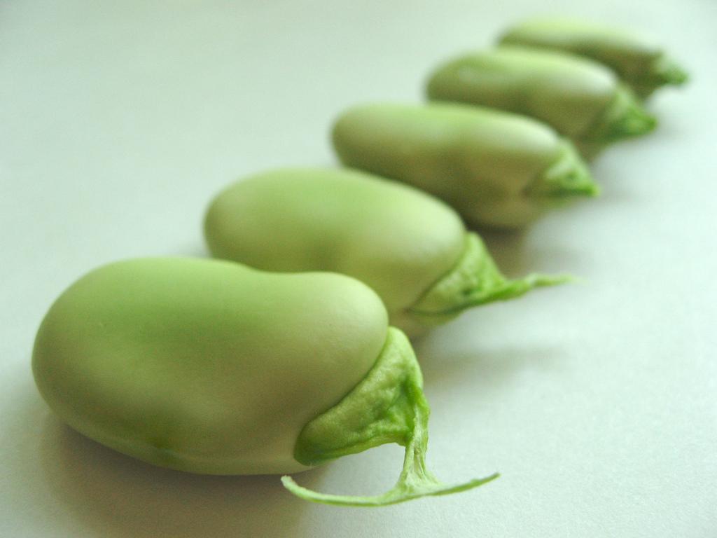 Bób, czyli fava beans po polsku - przepis taki, że lepszego nie ma