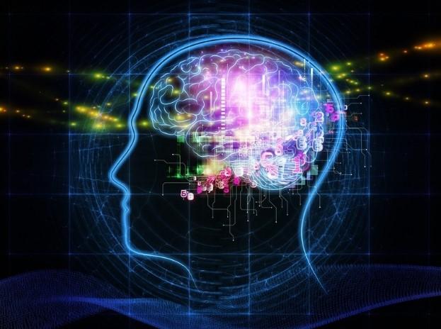 GABA działa w układzie nerwowym