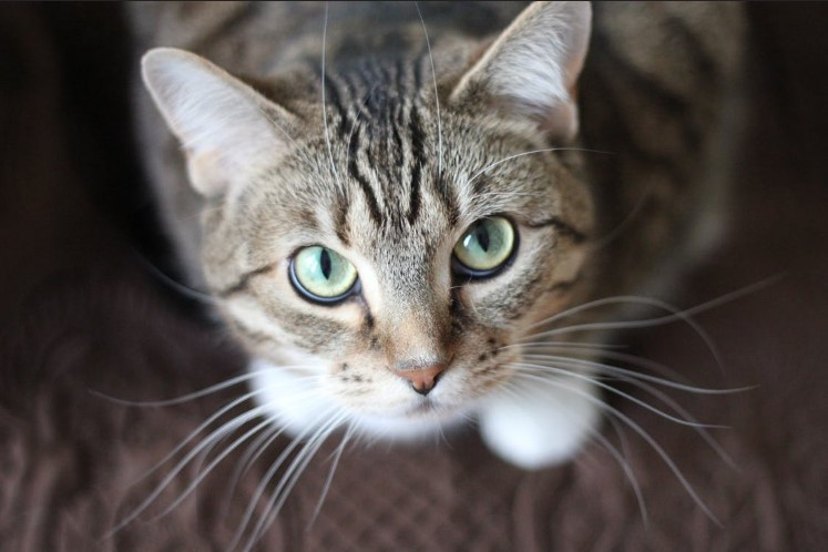 Przytul kotka